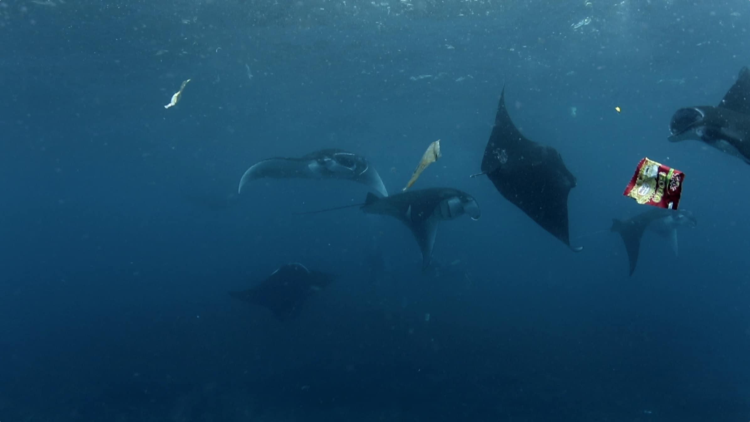 Plus De Plastique Que De Poisson En Mer, En 2050