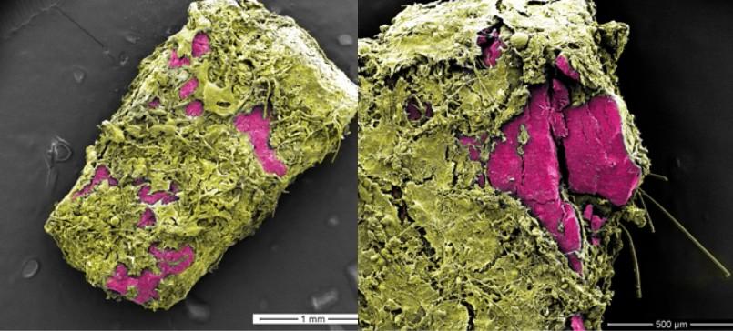 Microscopie électronique : Les Débris De Plastique Sont Très Colonisés !